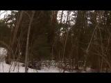 Охота на медведя Погибли медведь и собака
